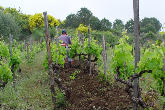 terre_nere_vineyard